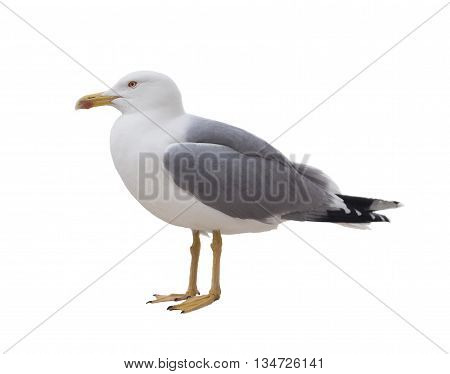 albatross bird isolated on white background image
