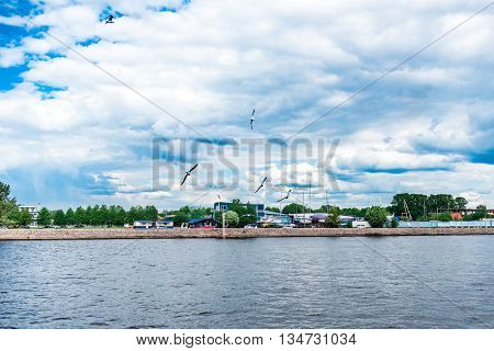 Seagulls over Malaya Neva river St.Petersburg Russia.