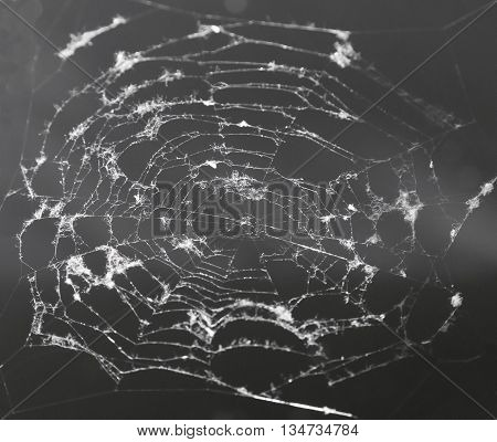 the old white cobweb with abstract texture is located closeup on a black background