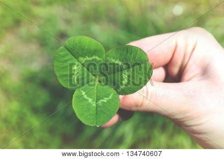 Female hand holding clover leaf, closeup