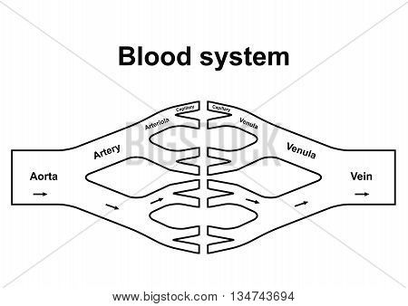 Blood Circulation System