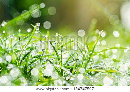The Fresh green grass with water drops.