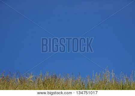 Green grass on background blue sky. Grass and sky. Summer panorama of wild nature. A large sky on a summer day.