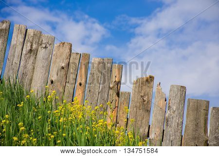 Pastoral views on palisade from wooden boards. Fence is a village full of flowers. Rural life outside the city. Landscape on bright flowers and a wooden fence on a ranch. Pasture for livestock.