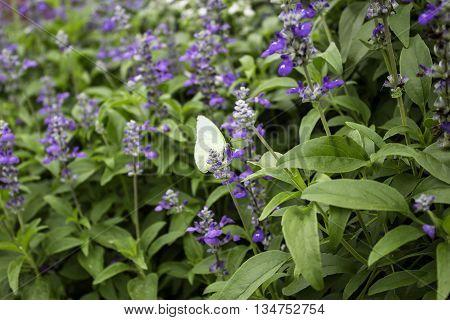 The purple flowers with butterflies little island.