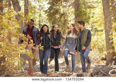 Five friends enjoying a hike in a forest, California, USA