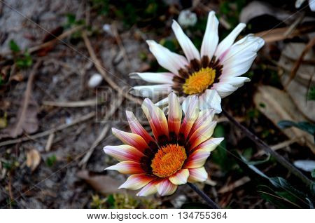 White flowers with orange pistil in the middle.