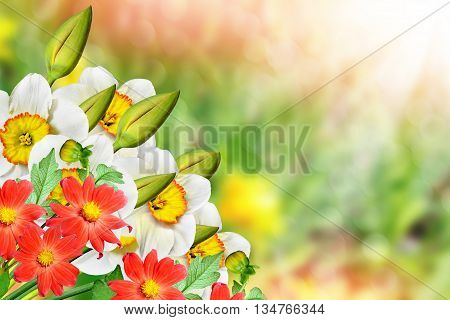 Spring landscape. beautiful spring flowers daffodils. yellow flowers. dahlia