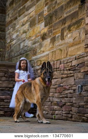 Caucasian girl wearing first holy communion dress with dog. Outdoors.