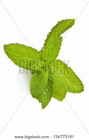 A sprig of mint against a white background.