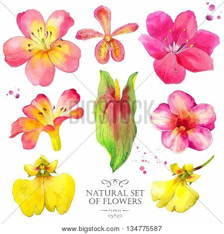 Watercolor collection of orchid anthurium and lily. Handmade painting on a white background.
