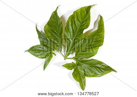 Hues Of Green On Shiny Decorative Leaves