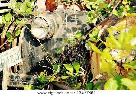 Old dirty lonely truck headlight covered with vines.