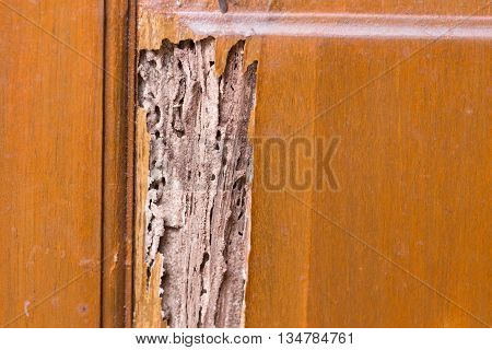 The wood door with termites damage.termites damage