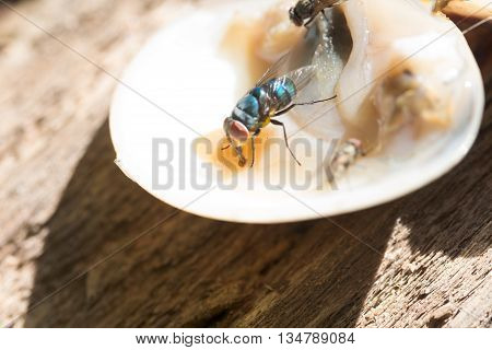 Close Up  Of A Dirty House Fly On A Fork Covered In Yellow Food