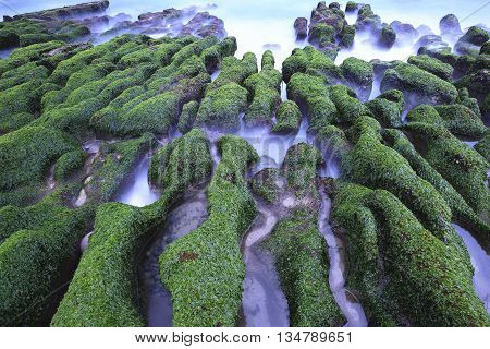 Stone Trench with green seaweed in spring