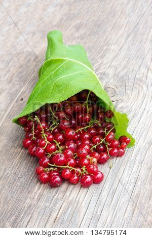 bunch of red ripe currant berry with pigtails on the green burdock leaves scattered on an old wooden board