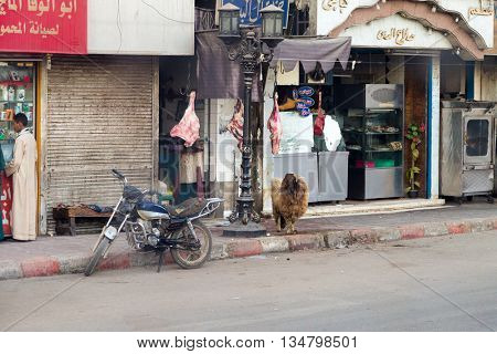 LUXOR, EGYPT - FEBRUARY 11, 2016: Sheep with attached feet in front of butcher shop, proves that meat is fresh.
