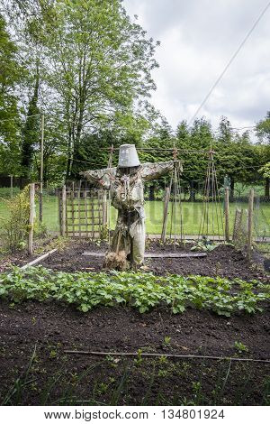 A scarecrow guarding the vegetable patch in a garden