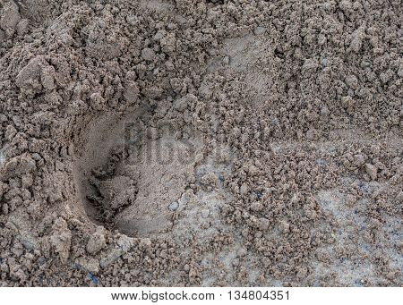 Horse Print in the Dirt at a racing track