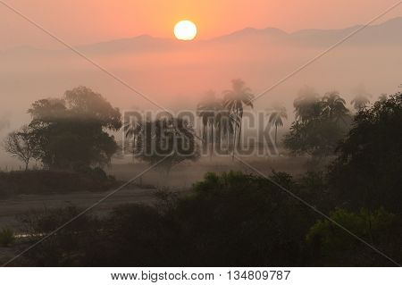 Jungle sunrise is a misty moring covering the jungle floor as the sun rises over the mountain horizon.