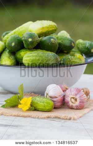 Cucumbers In Metal Bowl And Garlic In Garden On Sunny Day