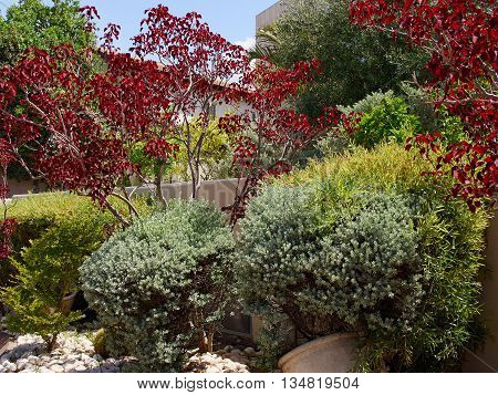 Beautiful classical Mediterranean garden with vibrant bright color plants
