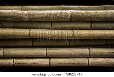Bamboo Trunk Background