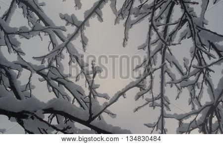 Egy havas fa ágai közül kitekintve ezt a képet látjuk, a szabadságot jelképezi