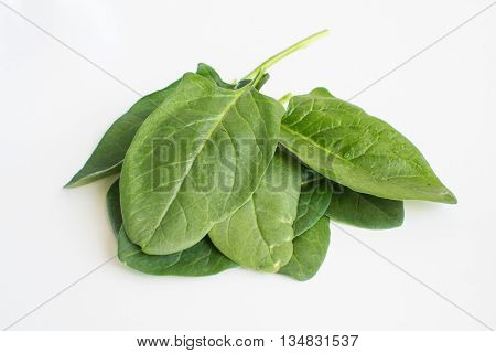 A small pile of english spinach isolated on white background