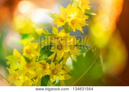 Flowers background, close up shot