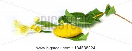 frozen fruit lemon juice frozen ice cubes isolated on white background. Feminine beauty and cosmetics concept Jasmine branch