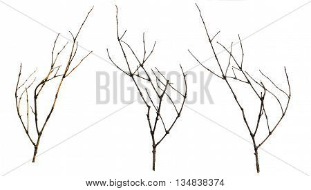 old dry branches blackberry Sicks and twigs wood bundle isolated on white background