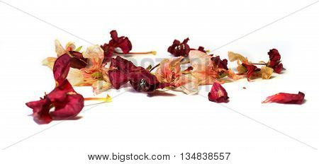 geranium dry delicate flowers and petals of pressed pelargonium isolated on white background scrapbook
