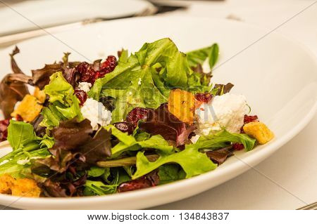 Gourmet Salad with Goat Cheese and Croutons in white bowl