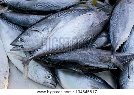Longtail tuna or Northern bluefin tuna on the utensil for sell in the fish market.