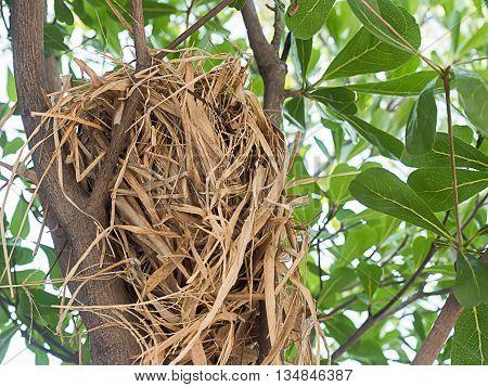 Bird's nest in a tree, it little bird's home