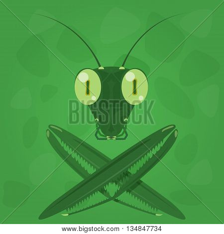 Mantis icon on a green background. Vector illustration.