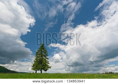 Green spruce tree between the dramatic clouds on mountain. Beautiful rural landscape with blue sky