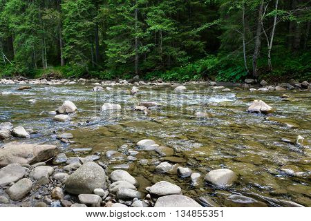 Mountain river flowing through the green forest. Fresh spring the stream of clean water. Ecologically clean zone