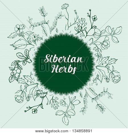 A set of Siberian medicinal herbs vector illustration