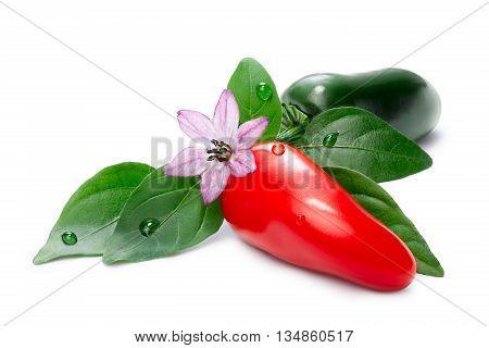 Hot Laminada Peppers (capsicum Annuum)