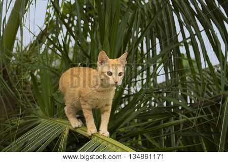 Cat climbing on coconut palm tree. Cute kitty on branch.