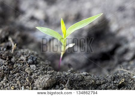 Seed germination growth into deep forest alone
