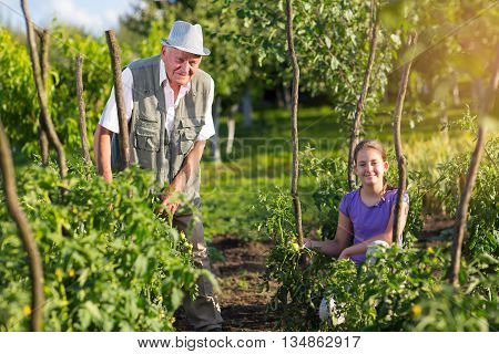 Grandfather with his granddaughter in the vegetable garden