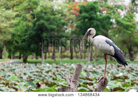 white Egret standing on timber in park