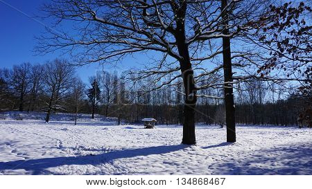A insect hotel on a great snowy meadow; bald trees, blue sky