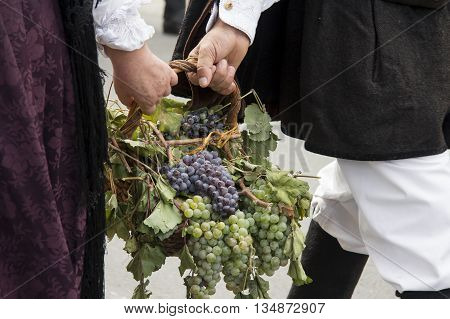 QUARTU S.E., ITALY - September 15, 2013: Wine Festival in honor of the celebration of St. Helena - Sardinia - basket of grapes carried by young people in Sardinian costumes