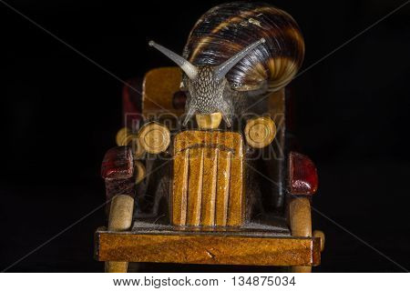 Snail riding a toy wooden car on black  background