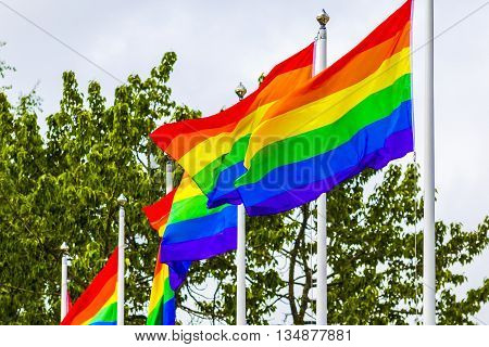 Rainbow Flags waving in the wind - during summer time